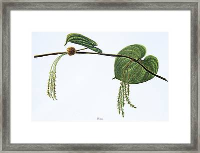 Hoi Framed Print by Hawaiian Legacy Archive - Printscapes