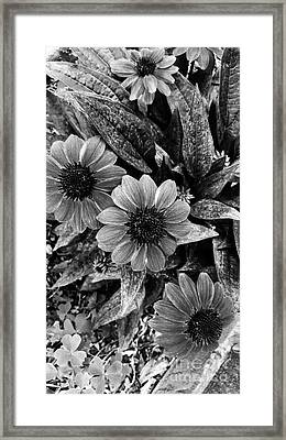 Hold On A Little Longer Framed Print