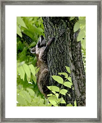 Hold On Tight Framed Print by E Mac MacKay