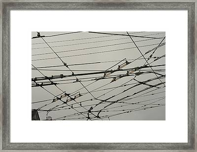 Hold The Line Framed Print