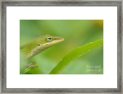 Hold The Wrinkle Cream Framed Print