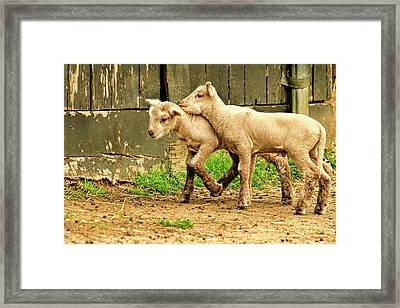 Hold You Head Up Hold Your Head Up   High Framed Print by Geraldine Scull