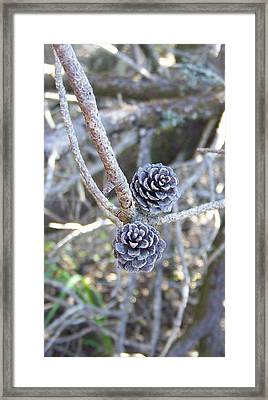 Framed Print featuring the photograph Holding On by Angi Parks