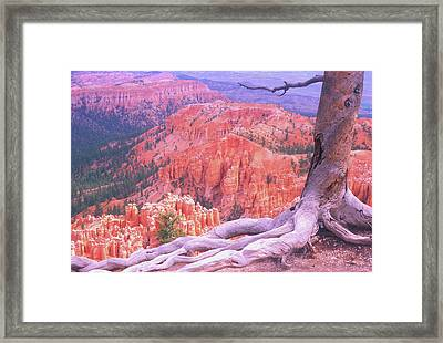 Holding On Framed Print by Dave Hampton Photography
