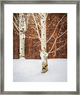 Holiday Aspens Framed Print