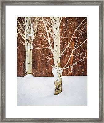 Holiday Aspens Framed Print by Elena E Giorgi