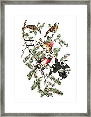 Framed Print featuring the photograph Holiday Birds by Munir Alawi
