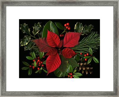 Holiday Greenery Framed Print by Deborah J Humphries