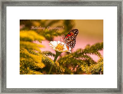 Holiday Greetings From Florida Framed Print