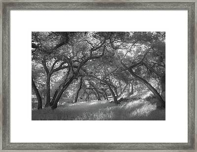 Framed Print featuring the photograph Hollenbeck Oak Hollow by Alexander Kunz