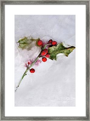 Holly 4 Framed Print
