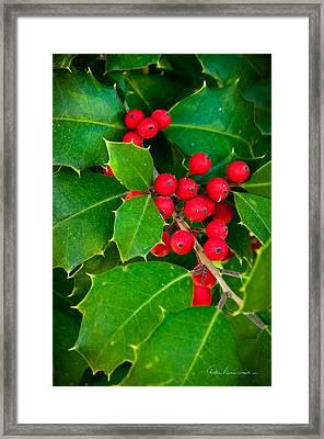 Holly 9218 Framed Print