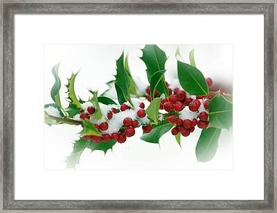 Framed Print featuring the photograph Holly Berries On White by Sharon Talson