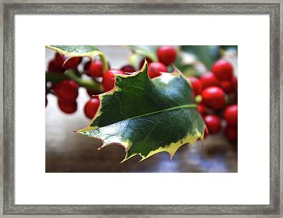 Holly Berries- Photograph By Linda Woods Framed Print