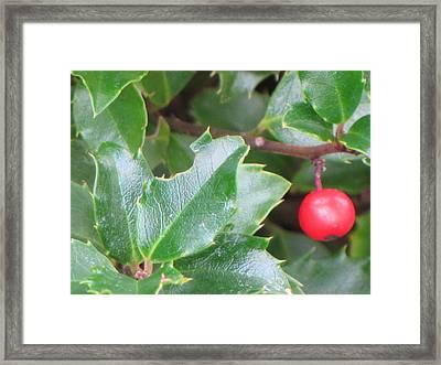 Holly Berry Framed Print by Sylvia Wanty
