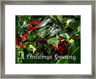 Holly Branches Framed Print