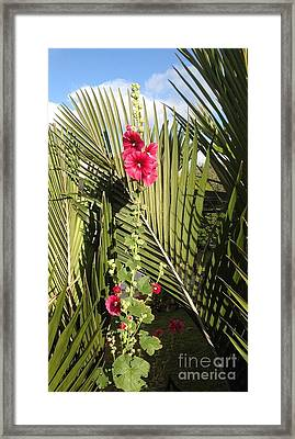 Holly Hock On Palm Leaves Framed Print