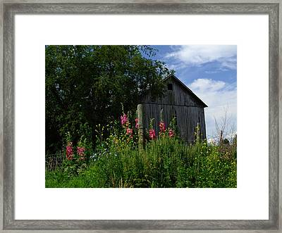 Hollyhock Barn Framed Print