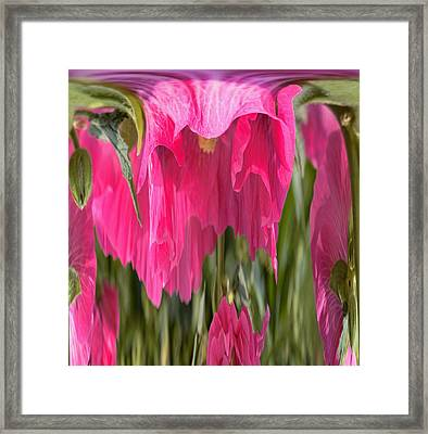 Hollyhock Drape Abstract Framed Print