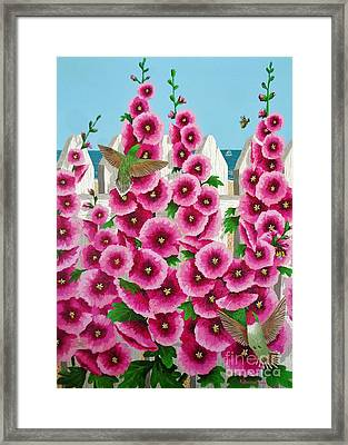 Hollyhocks And Humming Birds Framed Print