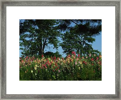 Hollyhocks And Trees Framed Print