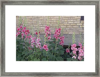 Hollyhocks Framed Print by Cynthia Powell
