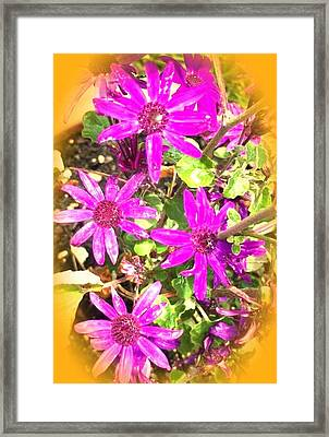 Hollywood Flower Stars Framed Print