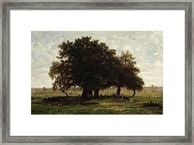 Holm Oaks Framed Print by Pierre Etienne Theodore Rousseau