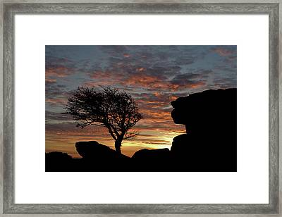 Holwell Tor And Lone Tree On Dartmoor Framed Print by Pete Hemington