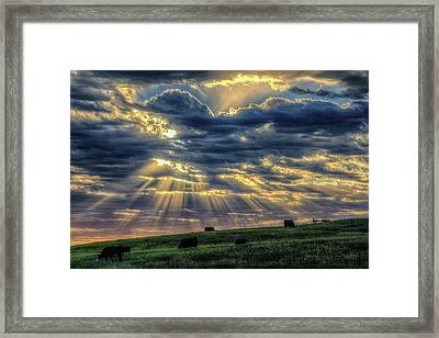 Holy Cow Framed Print