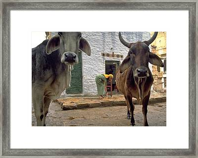 Holy Cow Framed Print