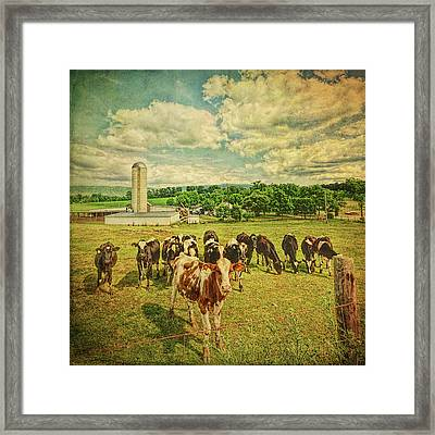 Framed Print featuring the photograph Holy Cows by Lewis Mann