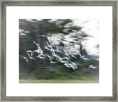 Holy Ghost Framed Print