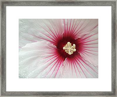 Holy Hibiscus Framed Print by Emerald GreenForest