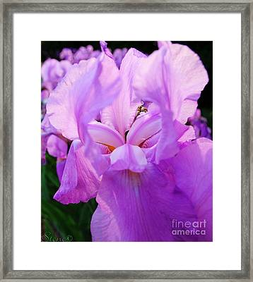 Holy Iris Framed Print