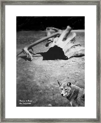 Homage To Josef Beuys Framed Print