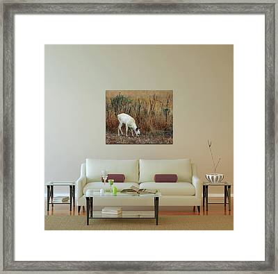 Home Decor With White Fawn Canvas Framed Print