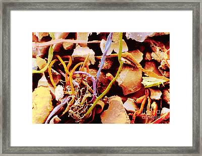Home Dust Fibres And Ceramic Dust Framed Print by Scimat