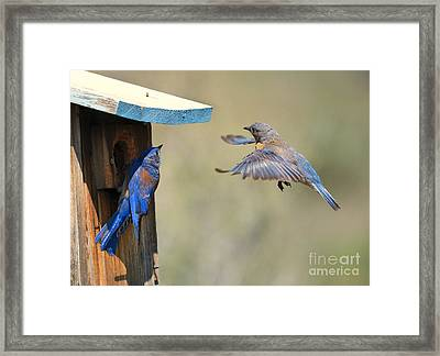 Home Inspection Framed Print by Mike Dawson