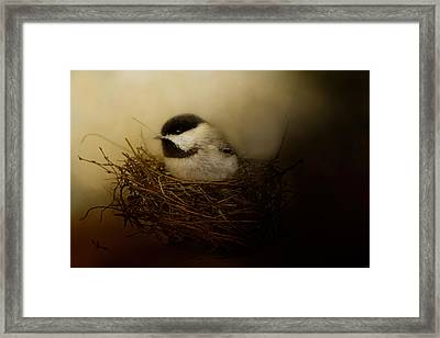 Home Tweet Home Framed Print