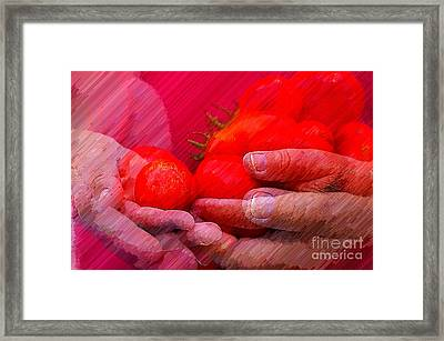 Homegrown Red Ripe Tomatoes Framed Print by Lewis Lang