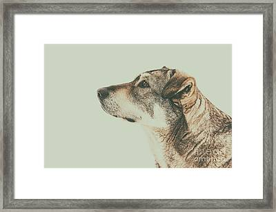 Homeless Dog Looking Up Portrait Framed Print by Radu Bercan
