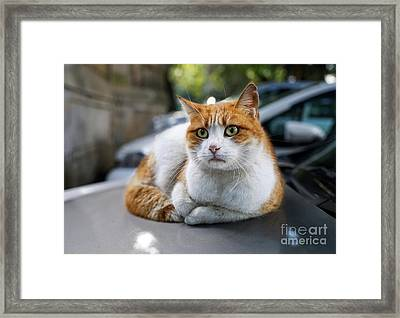 Homeless Red Cat Framed Print