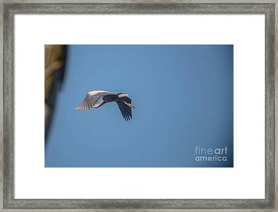 Framed Print featuring the photograph Homing Home by David Bearden