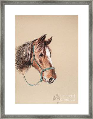 Honcho At The Morgan Horse Ranch Prns Framed Print by Paul Miller