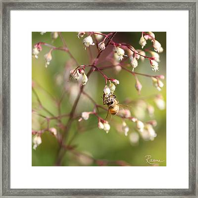 Honey Acrobat Framed Print