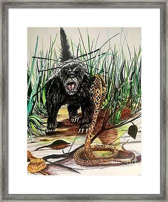 Honey Badger Framed Print