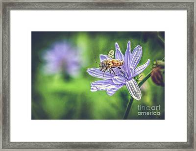 Honey Bee And Flower Framed Print