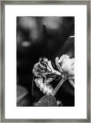 Honey Bee Framed Print by James Bull