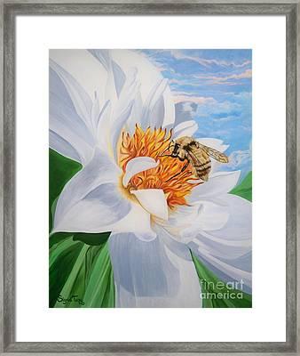 Honey Bee On White Flower Framed Print